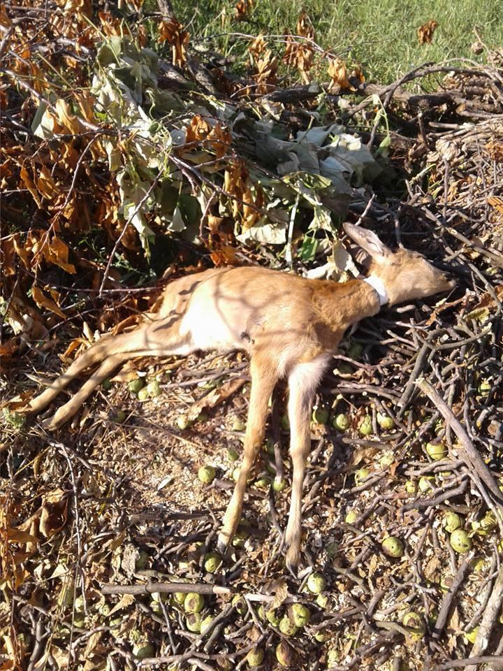 Шокуюча знахідка на Закарпатті: серед вуличного сміття виявили мертве оленятко (фотофакт)