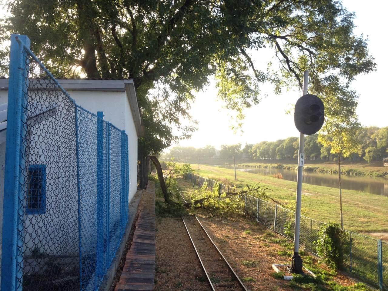Аварійні дерева загрожують дитячій залізниці в Ужгороді (ФОТО), фото-1