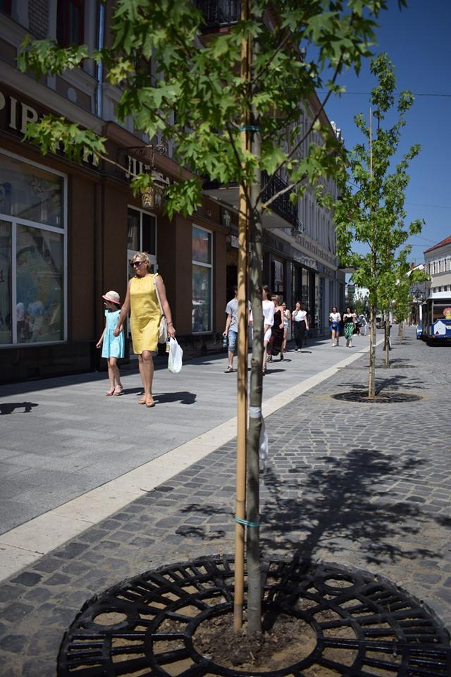 Біля дерев на площі Петефі нарешті прибрали дерев'яні огорожі та облаштували спеціальні решітки (ФОТО), фото-3