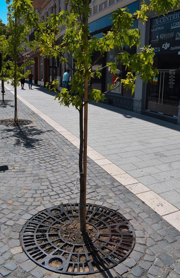 Біля дерев на площі Петефі нарешті прибрали дерев'яні огорожі та облаштували спеціальні решітки (ФОТО), фото-2